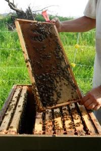 Organic Beekeeping