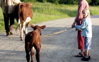 Adult and child leading calf